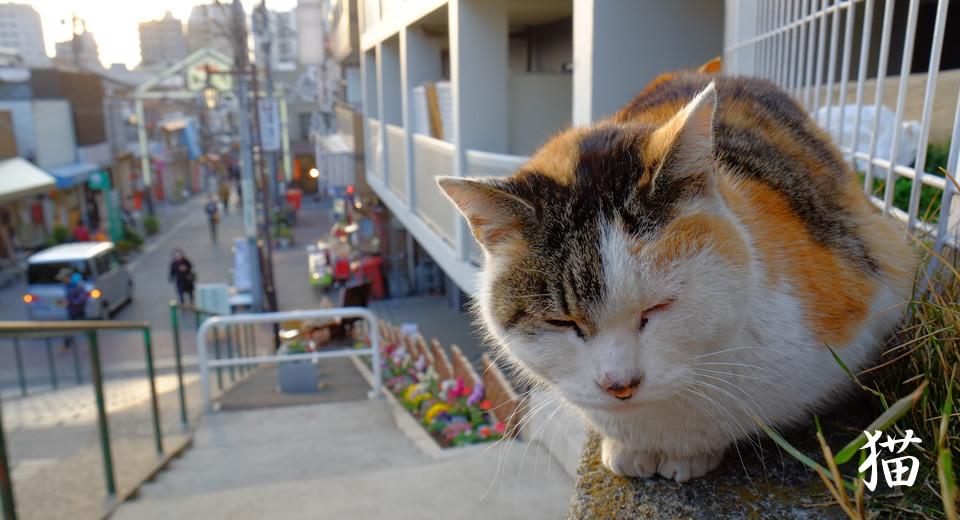 画像:谷中銀座と猫